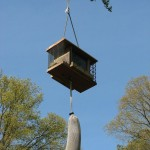 Hanging Bird Feeders from Trees
