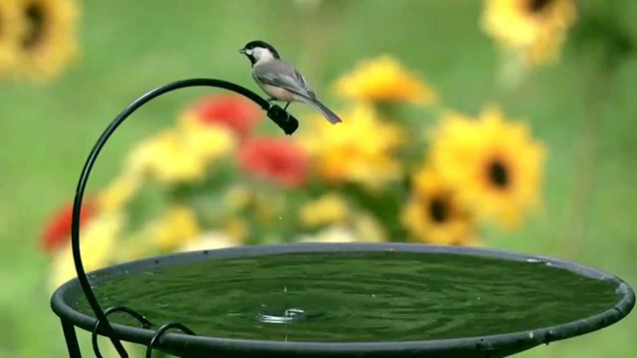 Hanging Heated Bird Bath