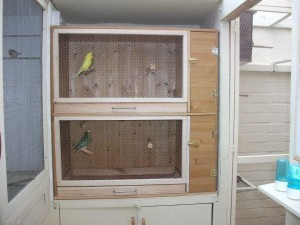 Homemade Bird Aviaries and Flight Cages