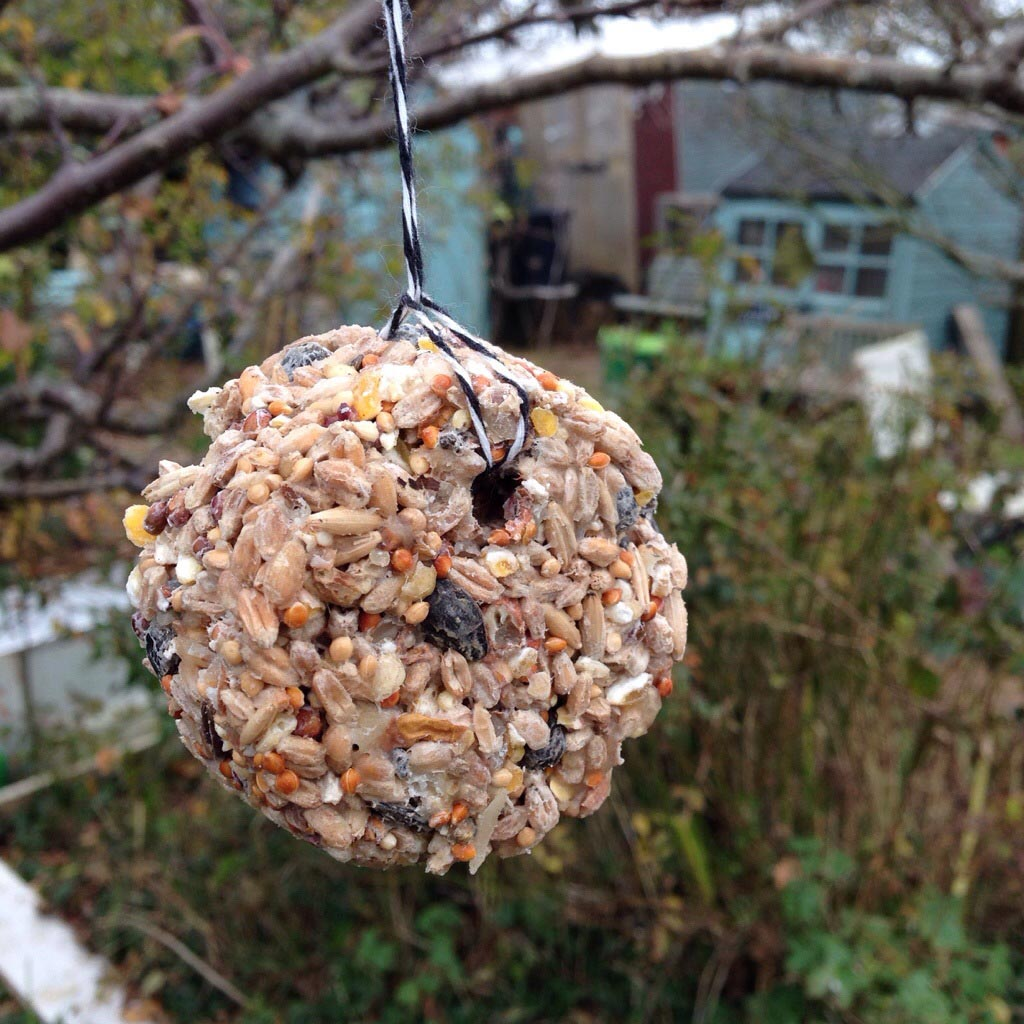 Homemade Bird Food Balls