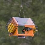 Homemade Oriole Bird Feeders