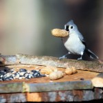 Homemade Wild Bird Food