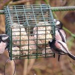 Homemade Wild Bird Food Recipes