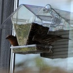 House Window Bird Feeder