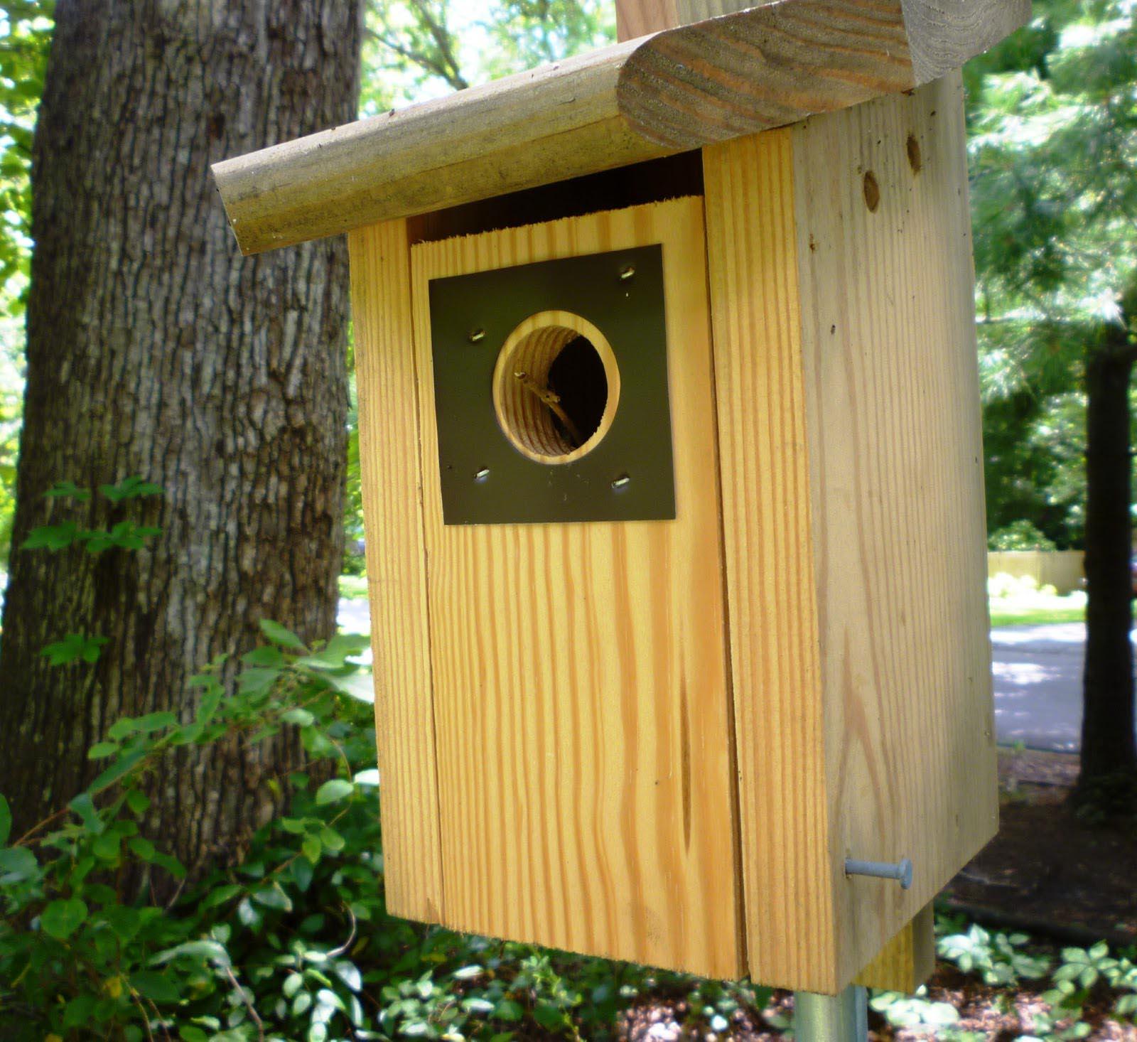 House Wren Baby Birds
