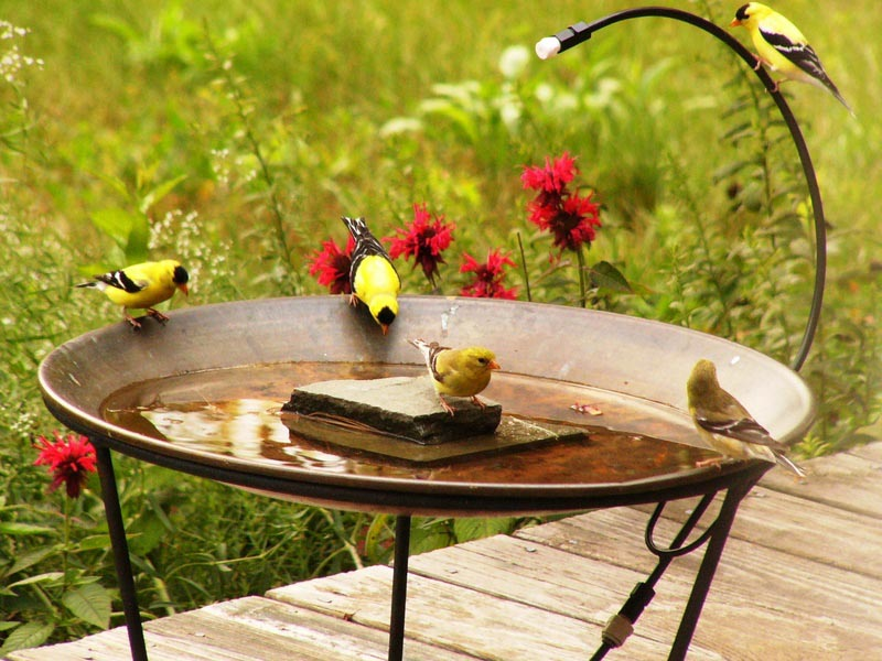 Hummingbird Bird Bath Mister