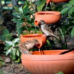 Hummingbird Fountain Bird Bath