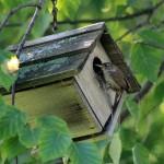 Jenny Wren Bird House