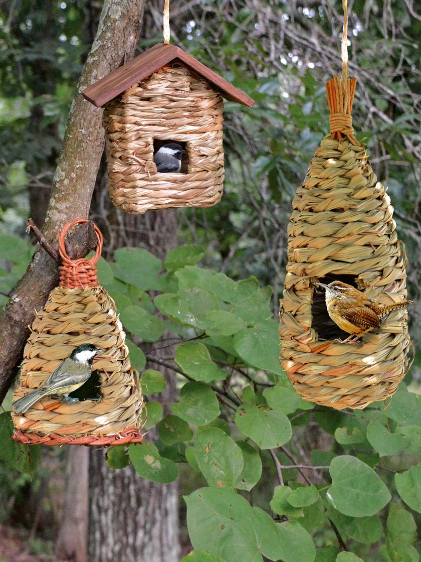 Jenny Wren Bird House Plans
