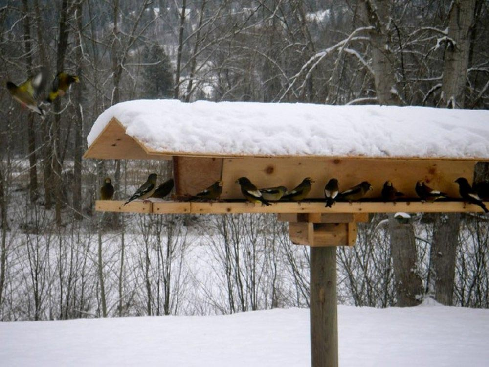 Large Bird Houses Outdoor