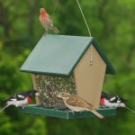 Large Hopper Bird Feeder