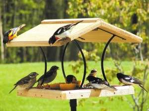 Large Platform Bird Feeder