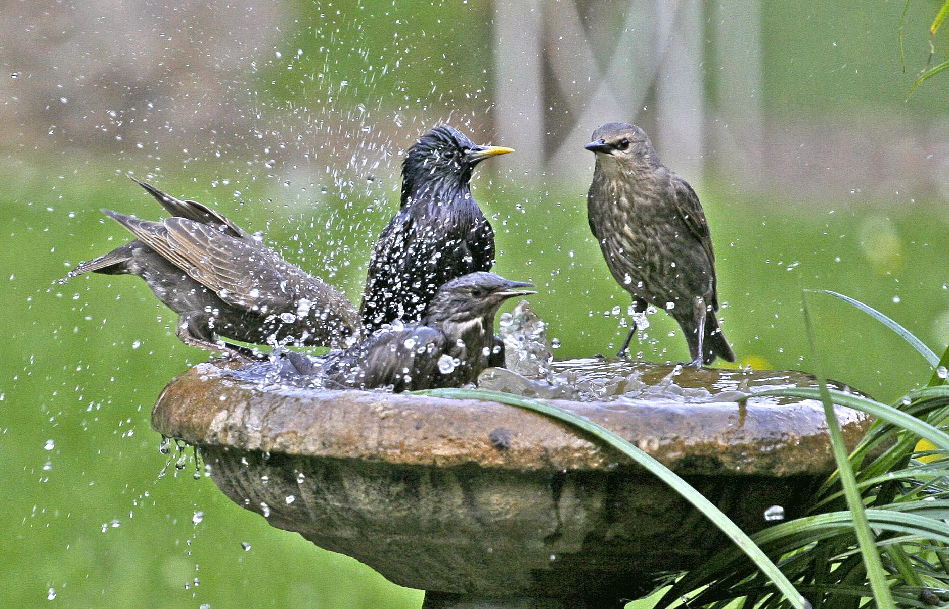 Make a Hanging Bird Bath