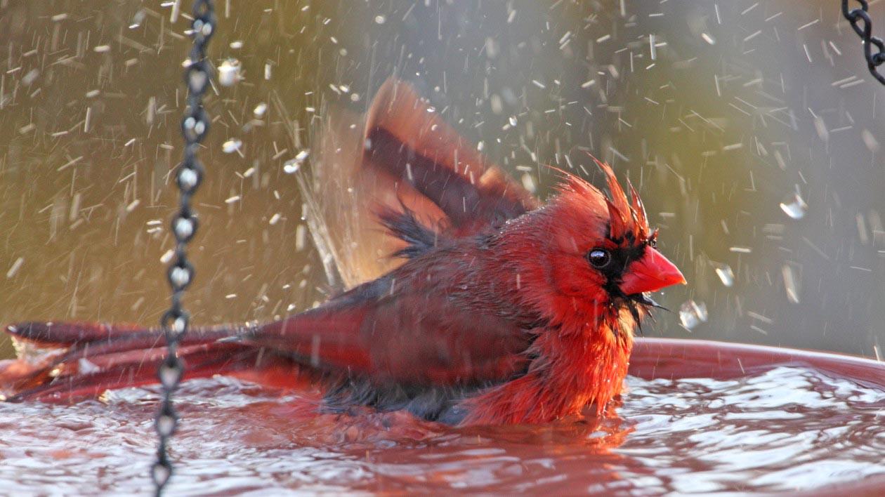 Make Your Own Hanging Bird Bath