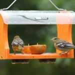Making an Oriole Bird Feeder