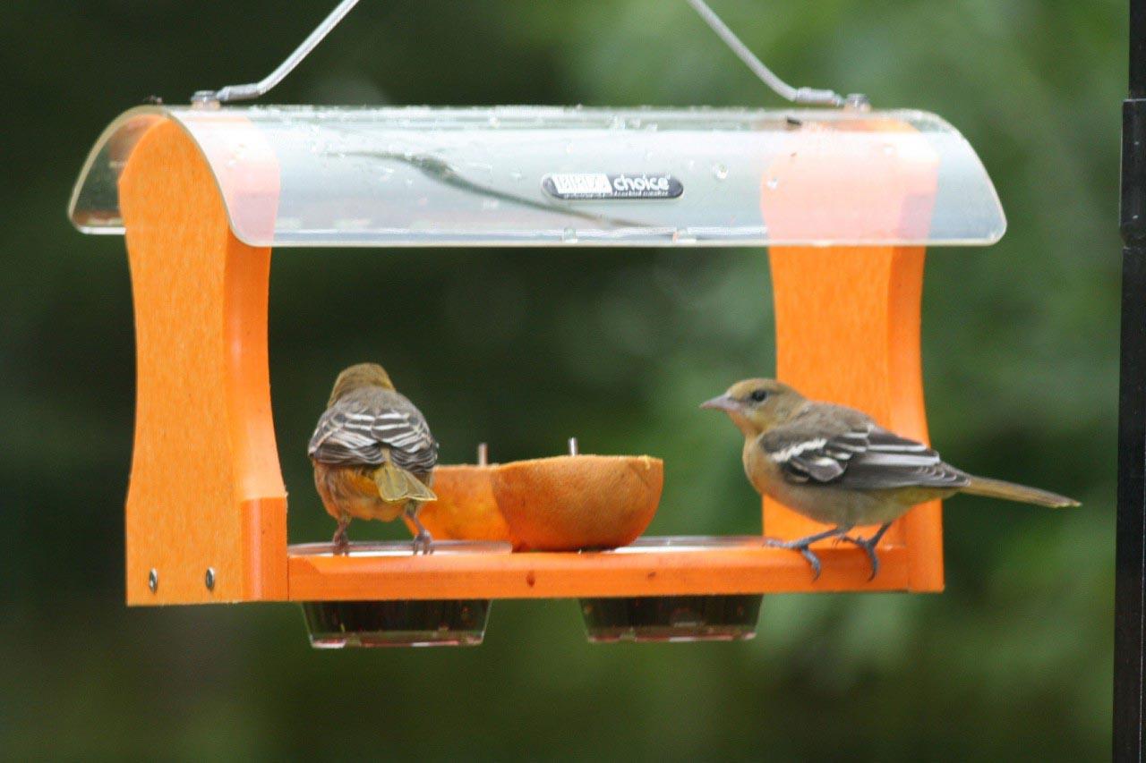 Making an Oriole Bird Feeder