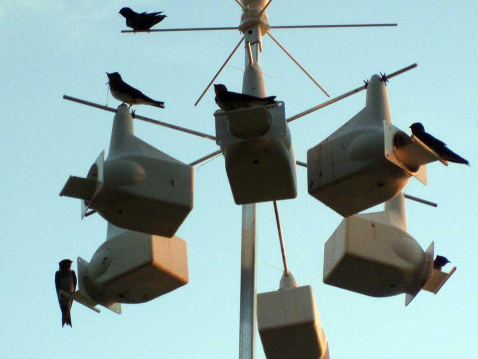 Martin House for Birds