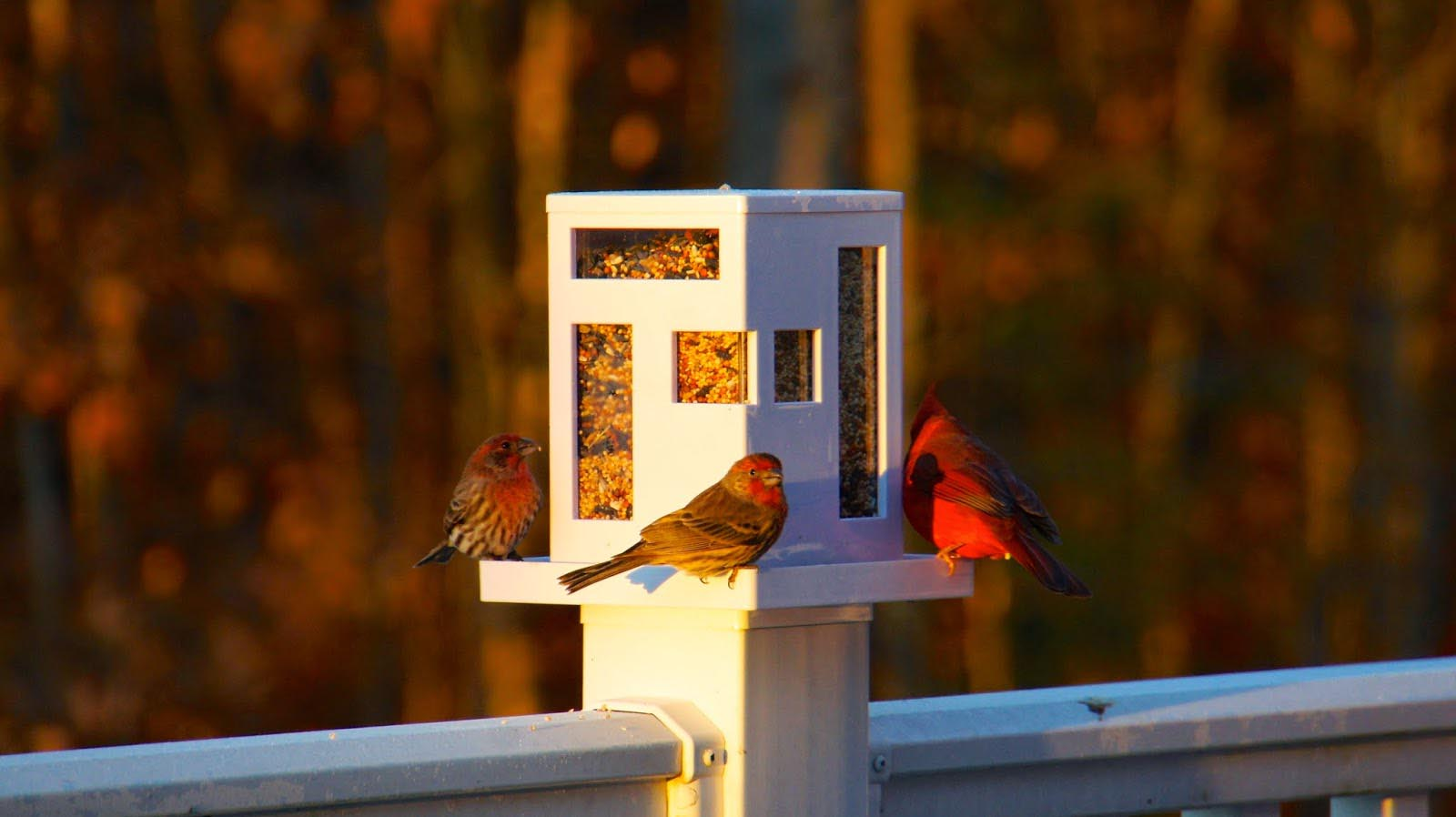 Modern Bird Feeder DIY