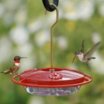 Oriole Bird Feeder Recipe