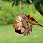 Oriole Bird Feeder Reviews