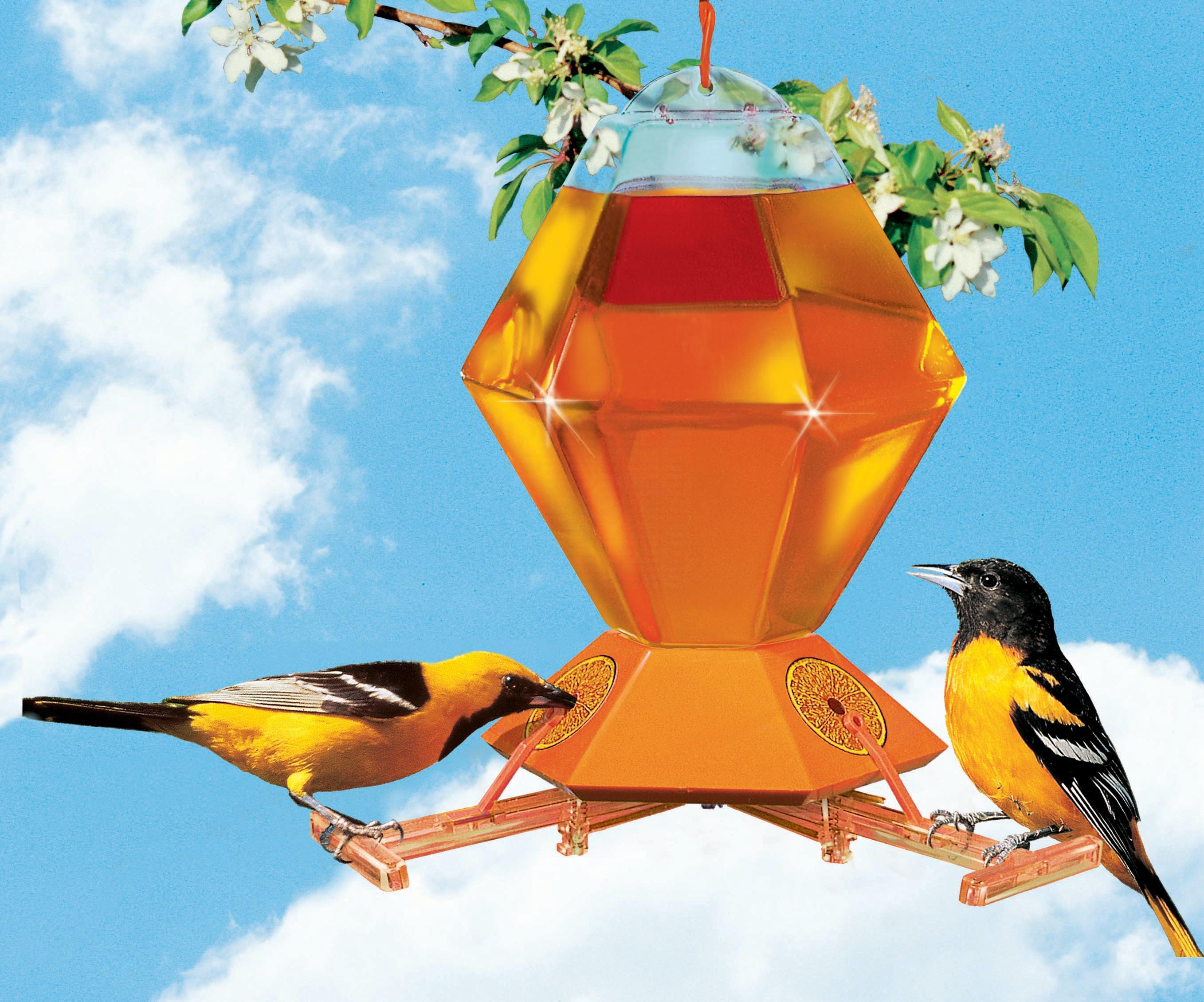 Oriole Bird Feeder with Bee Guard