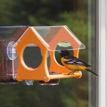 Oriole Bird Feeders Tips
