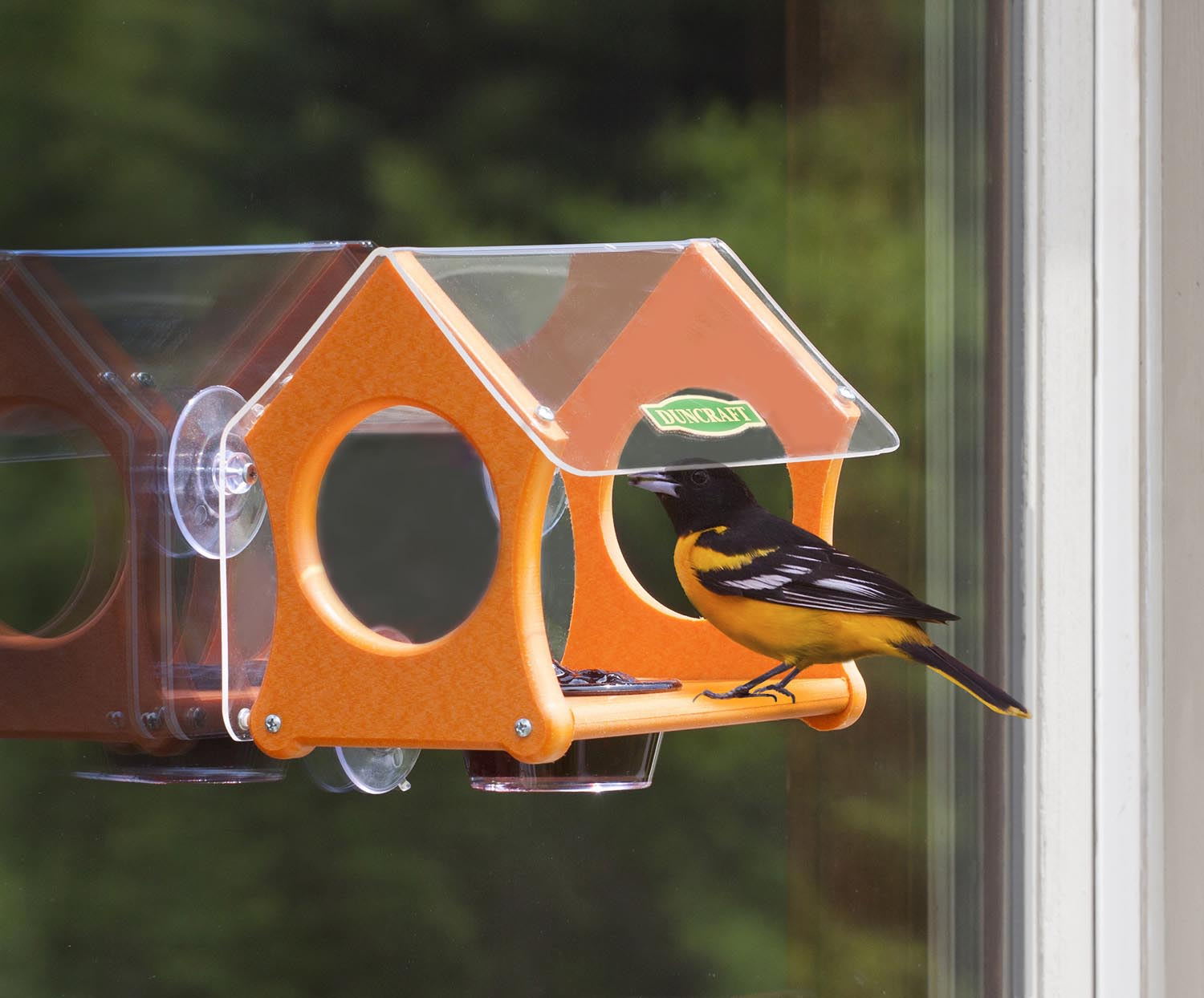 Oriole Bird Feeders Tips