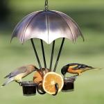 Oriole Jelly Bird Feeders