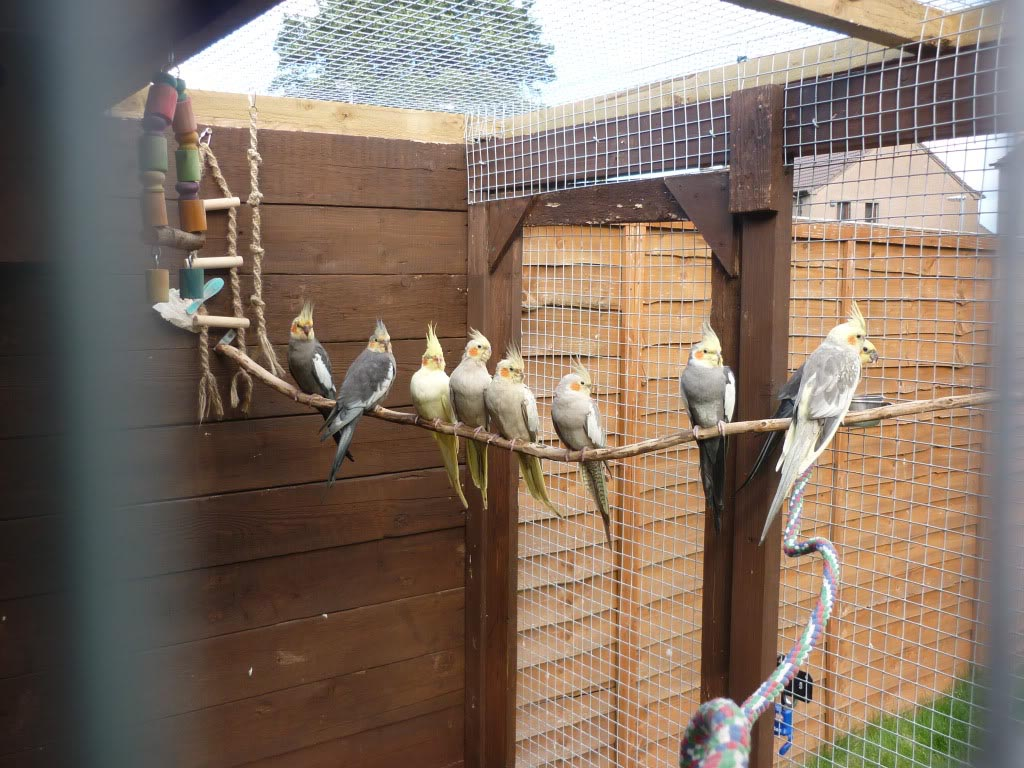 Outdoor Aviaries for Birds