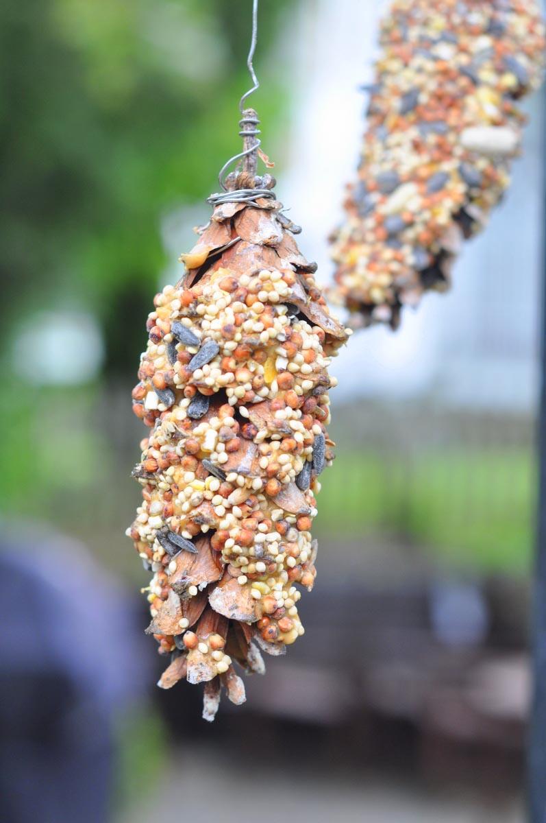 Pine Cone Bird Feeder Craft