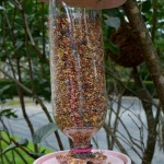Plastic Bottle Bird Feeder Craft