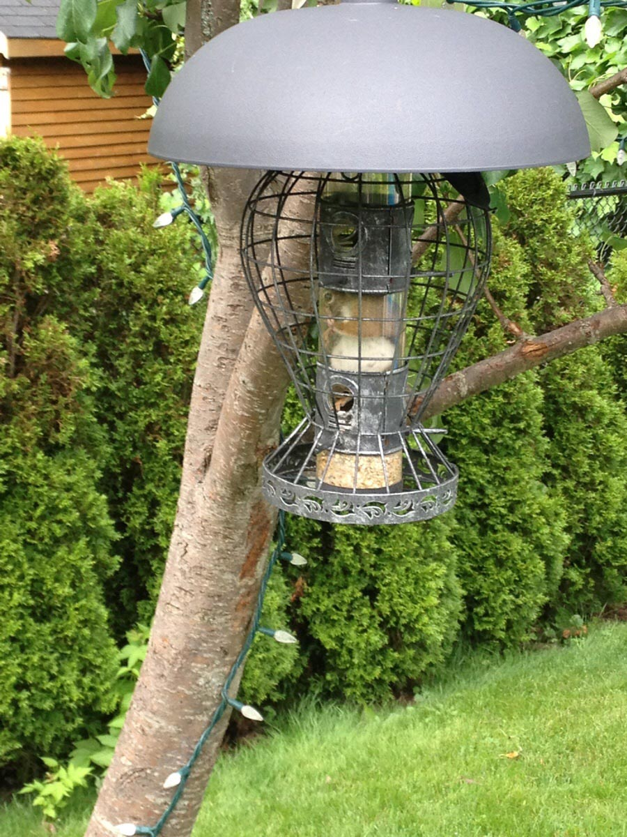 Squirrel Proof Bird Feeder DIY
