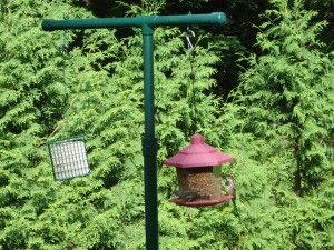 Stand Alone Bird Feeder