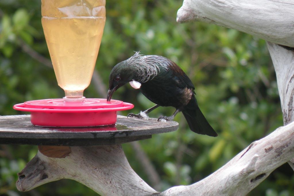 Sugar Water Bird Feeder