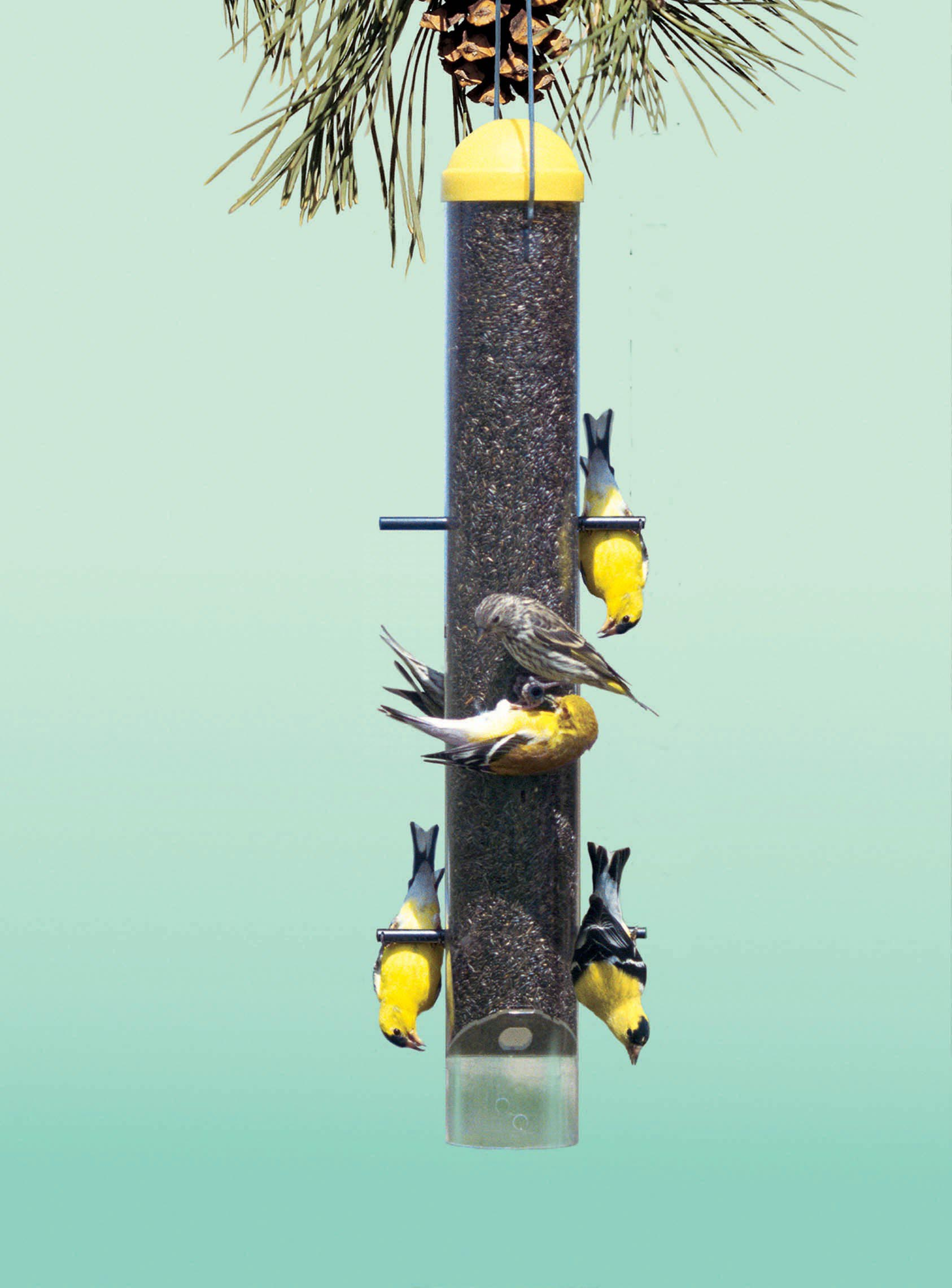 Upside Down Finch Bird Feeders