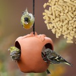 Where to Hang a Bird Feeder