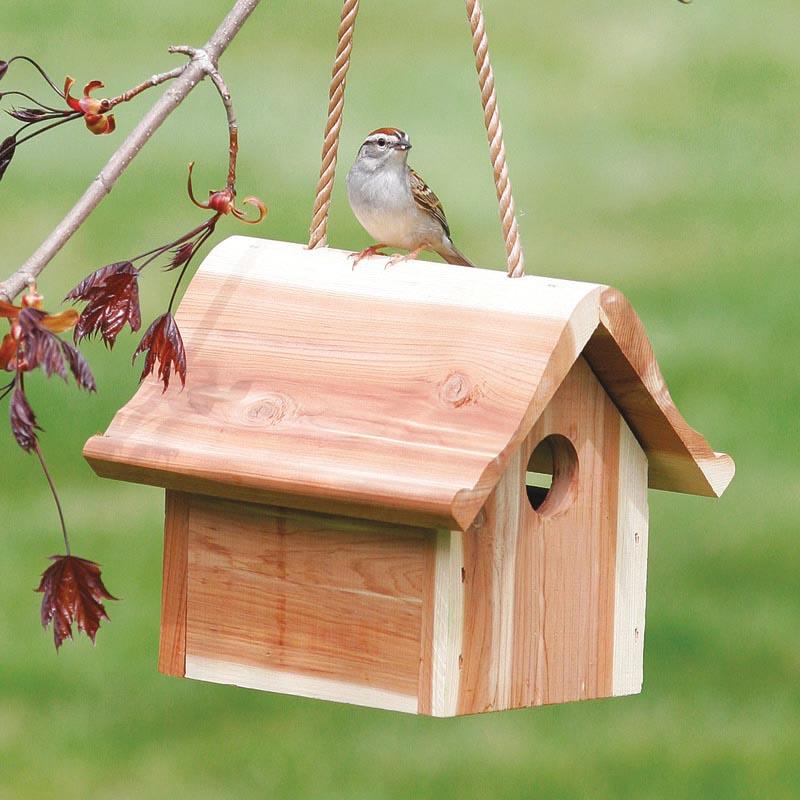 Where to Hang a Wren Bird House