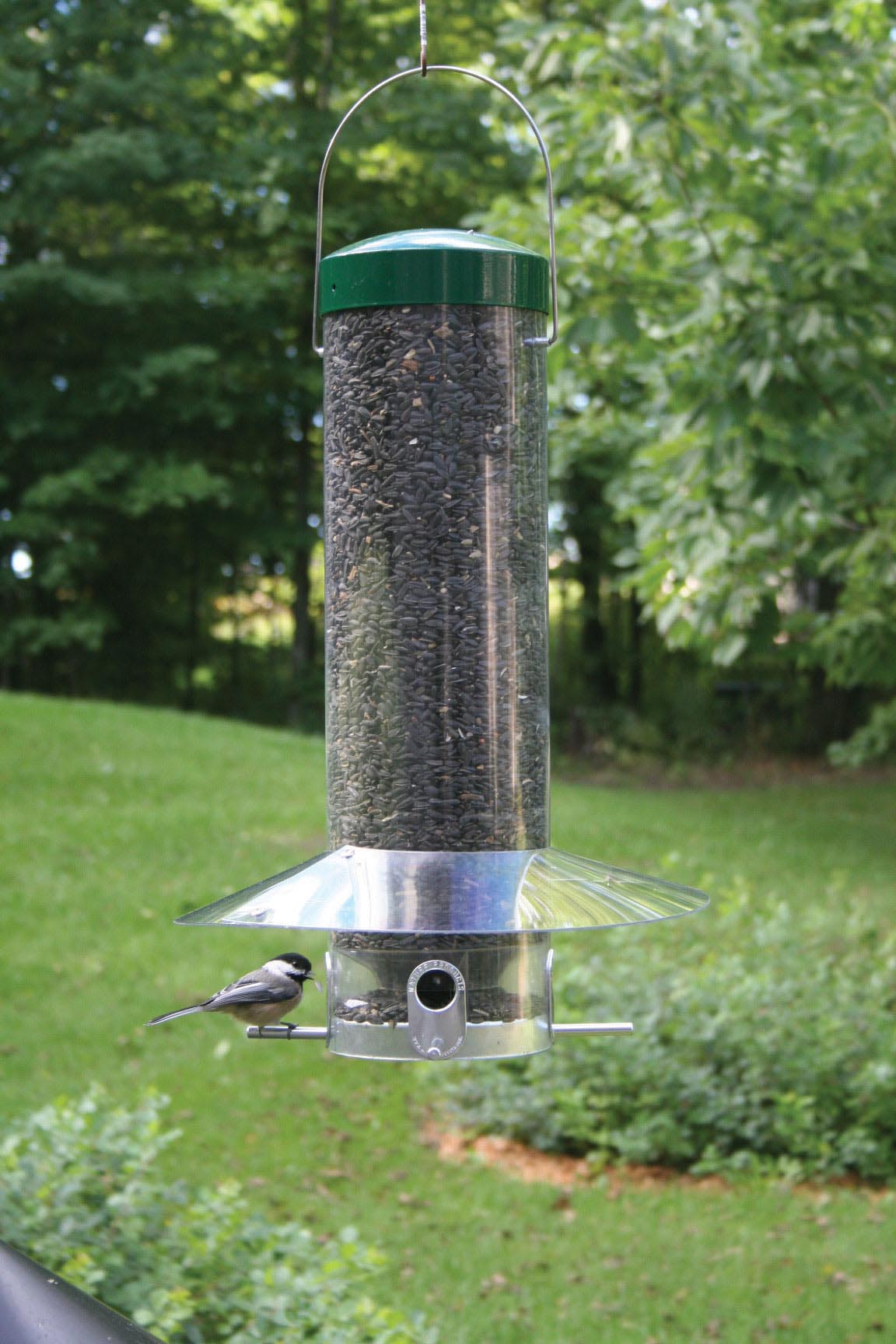 Where to Hang Bird Feeders