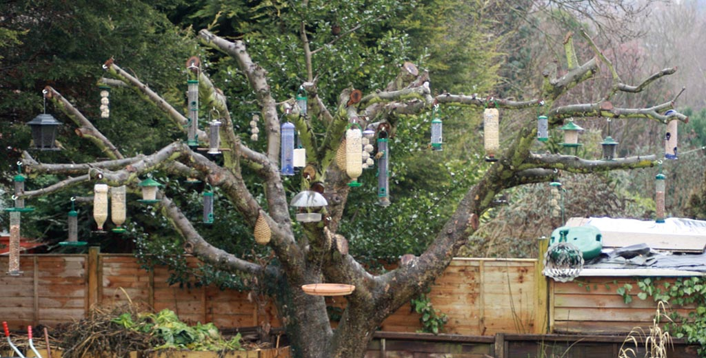 Where to Place Finch Bird Feeders