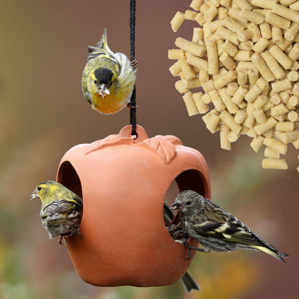 Wild Bird Feeder Stations