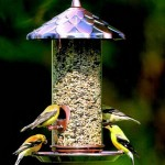 Wild Bird Finch Feeder