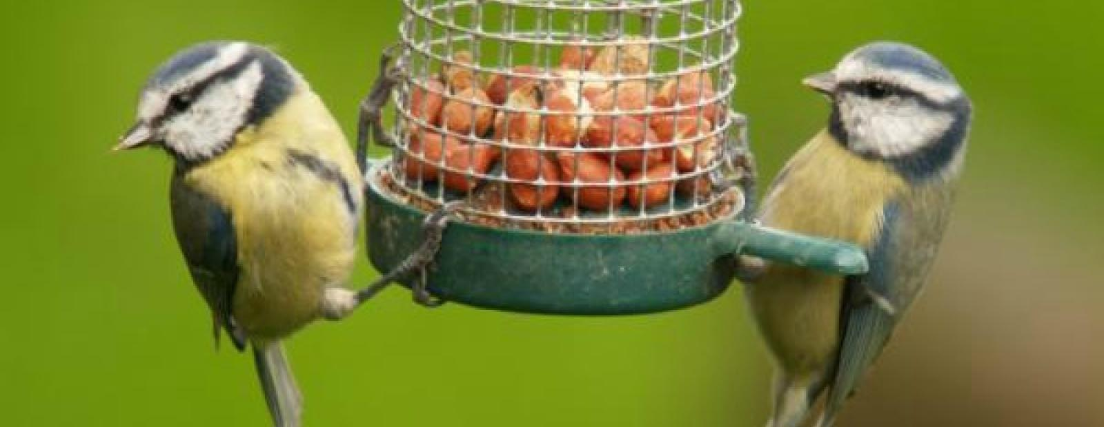 Wild Bird Food Recipes Homemade
