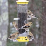 Wild Birds Unlimited Finch Feeder