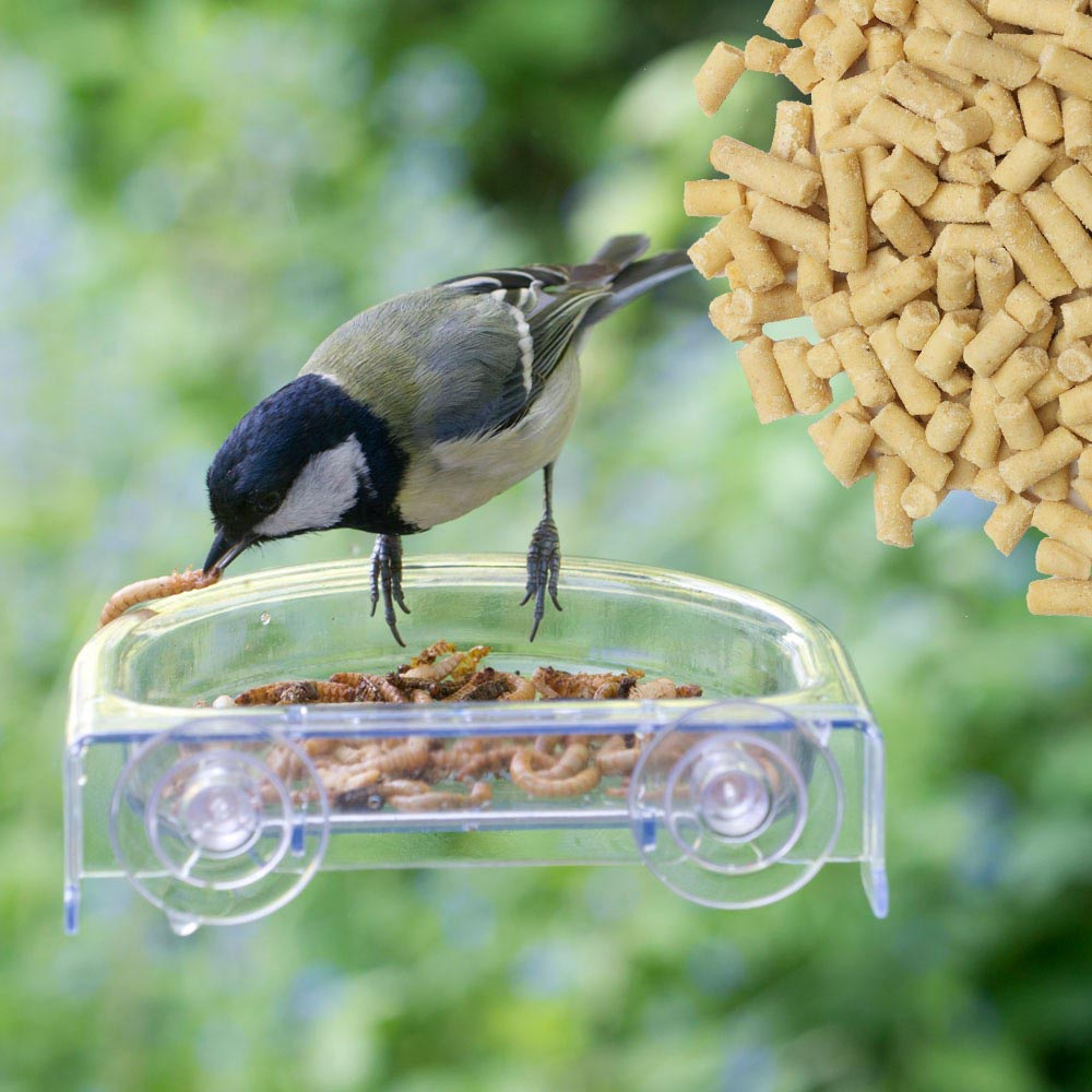 Window Bird House Reviews
