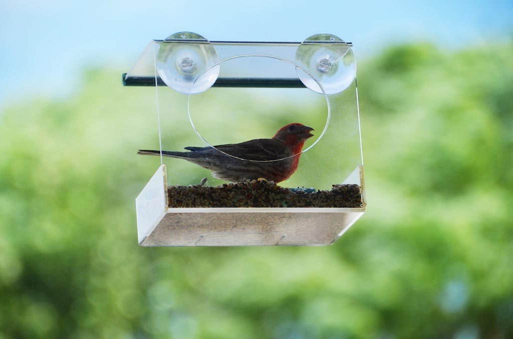 Window Mounted Bird House