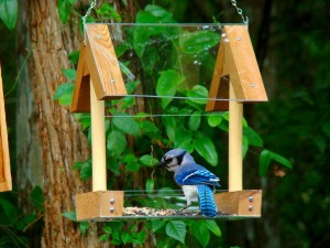 Wooden Bird Feeder Ideas