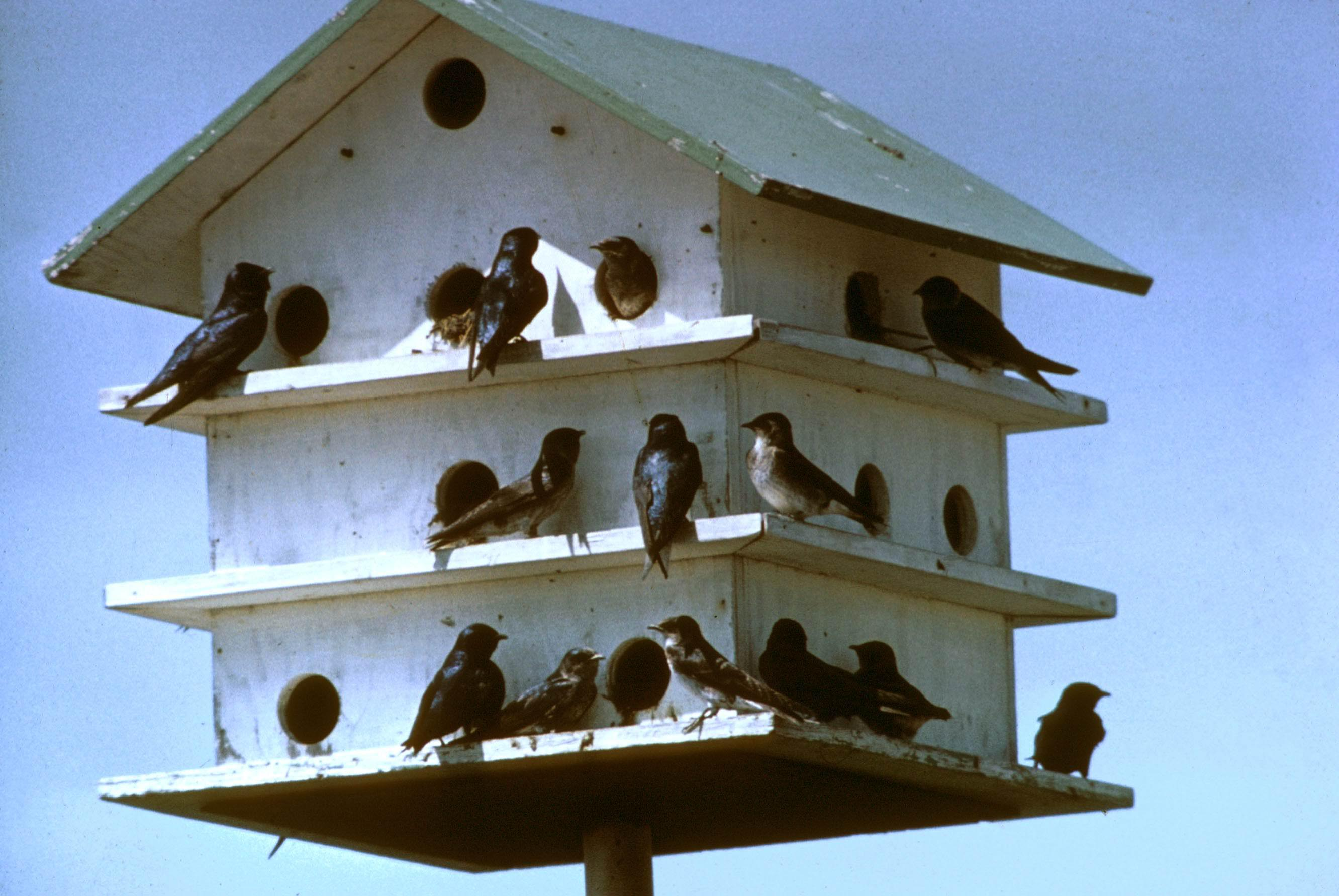 Wooden Martin Bird House