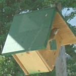 Wren Bird Houses Placement
