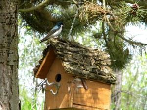 Bird Building Nest in My House