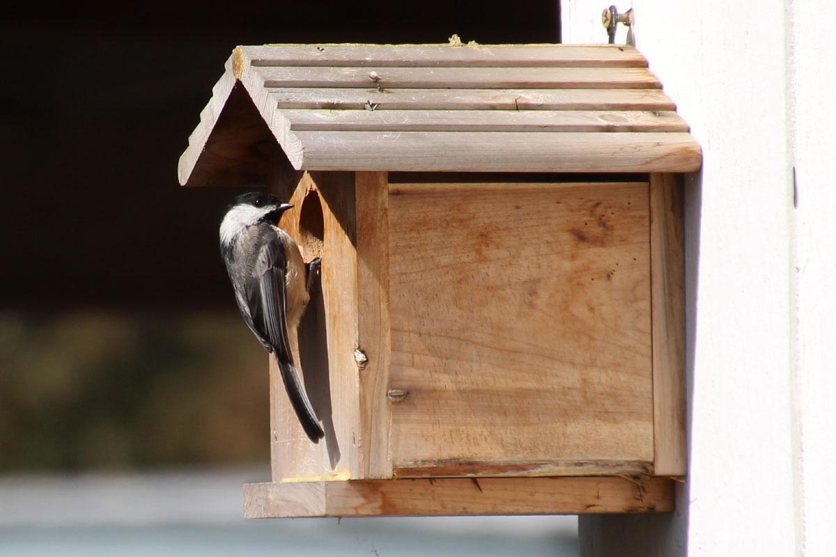 Bird House for Chickadee